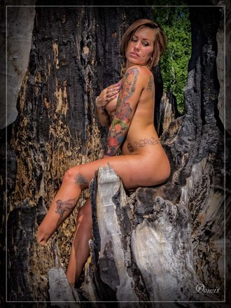 Tattoos Nature Photo by Photographer Domit