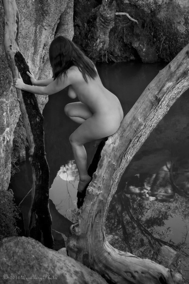 The Split Tree Pt. 2 Artistic Nude Photo by Photographer Dexellery Photo