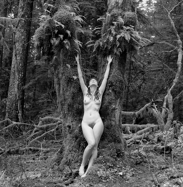 The Tree Artistic Nude Photo by Photographer Andrew Kaiser