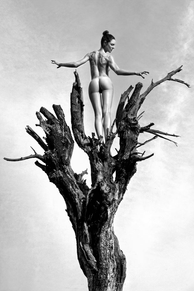 The Tree Artistic Nude Photo by Photographer Roberto Manetta