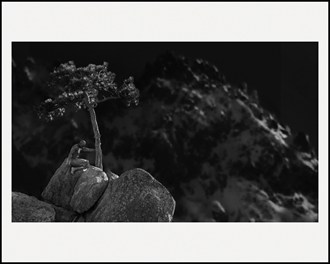 The Zen Tree Artistic Nude Photo by Artist LightBrushedImages