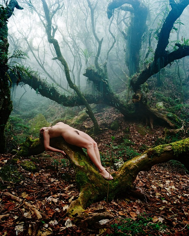 The offering Artistic Nude Photo by Photographer Diane Rainard