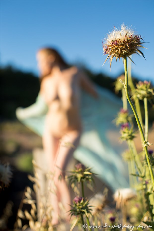 Thistles and Softness Artistic Nude Photo by Model AnudeMuse