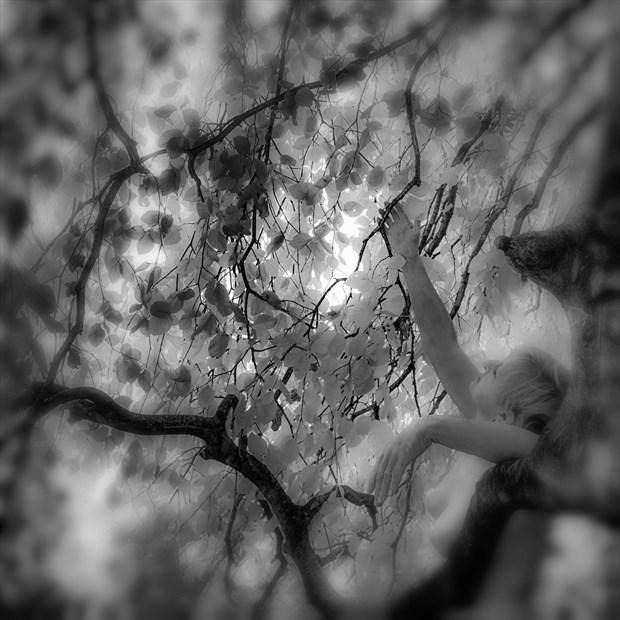 Tree Lover Artistic Nude Photo by Photographer MickeySchwartz