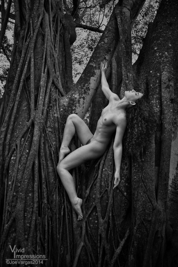 Tree Nymph Keira 2 Artistic Nude Photo by Photographer Vivid Impressions