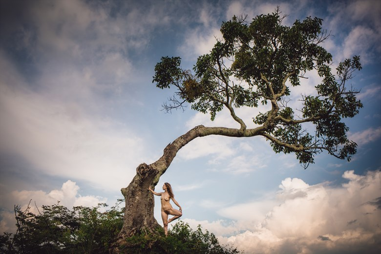 Tree nymph Artistic Nude Photo by Photographer GerardChillcott