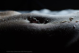 Umbilicus Artistic Nude Photo by Photographer AOPhotography