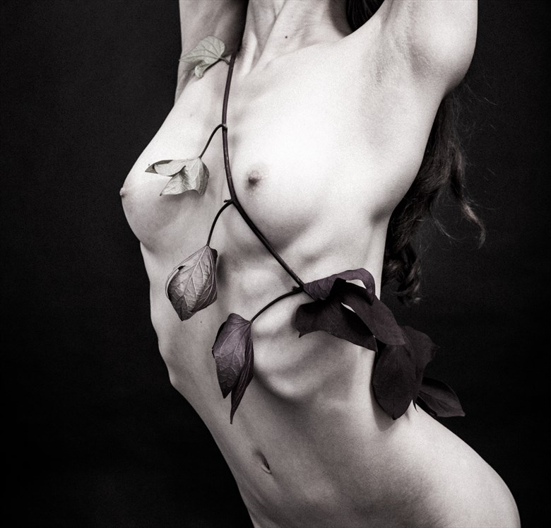 Vine Artistic Nude Photo by Photographer lancepatrickimages