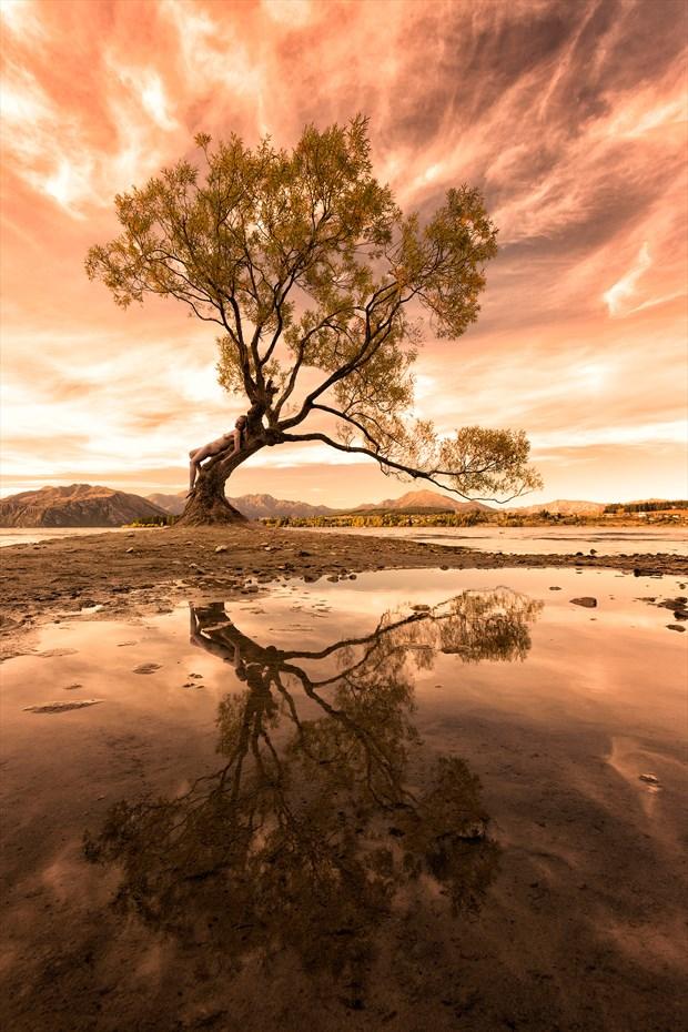 Wanaka Willow Nature Photo by Photographer TreeGirl