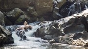 Waterfall Artistic Nude Photo by Model MaryCeleste