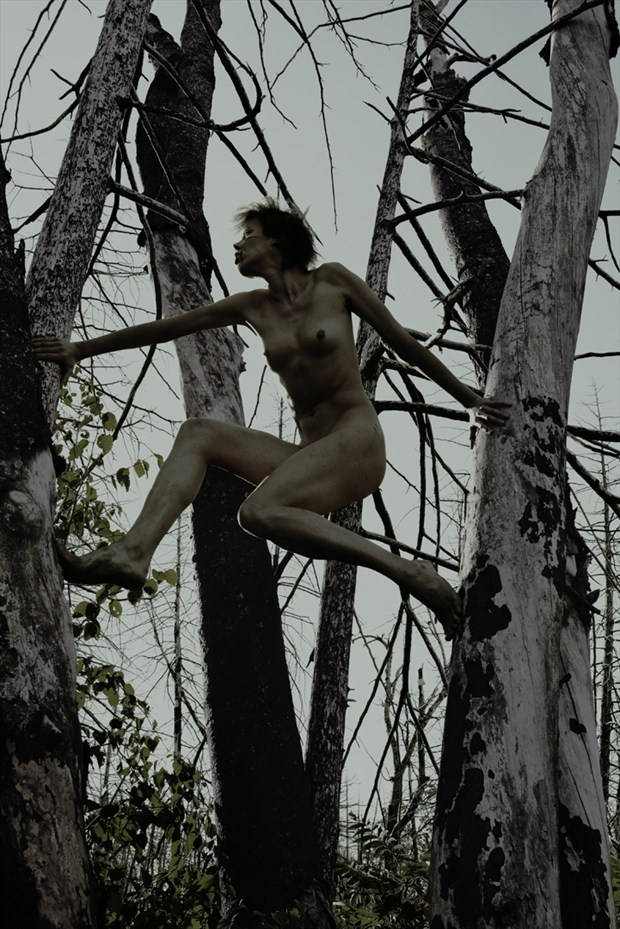 Wild on a tree  3 Artistic Nude Photo by Photographer Jyves