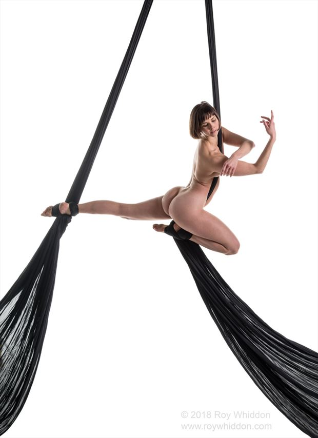 aerial grace i artistic nude photo by photographer roy whiddon