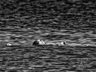 afloat portrait photo by photographer luke horne photography