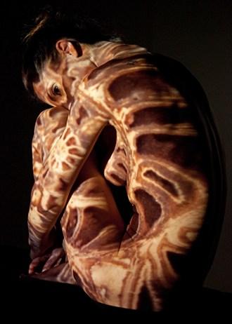 ammonite Artistic Nude Photo by Photographer Cdesir