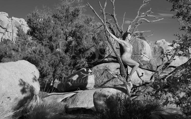 an oasis in the desert artistic nude photo by photographer spv