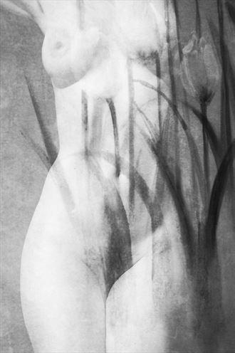 artistic nude erotic photo by photographer bredak