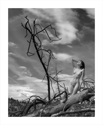ashley no 250 artistic nude photo by photographer g r nylander