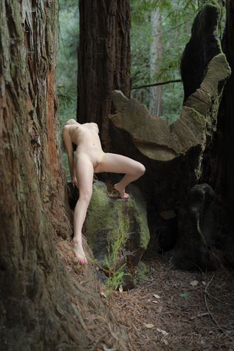bambii in the forest nature photo by photographer fotografie randall