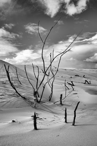 bare trees in the sand artistic nude photo by photographer stephen wong