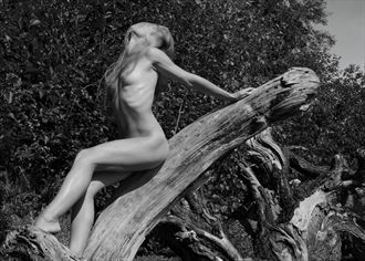 beach wood artistic nude photo by photographer mike 256