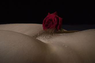 beauty and the rose artistic nude photo by photographer mick egan