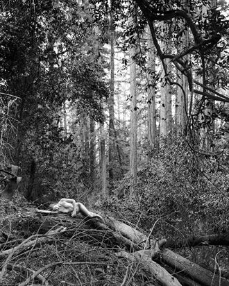 becca ann in the old woods artistic nude photo by photographer jefflamarche