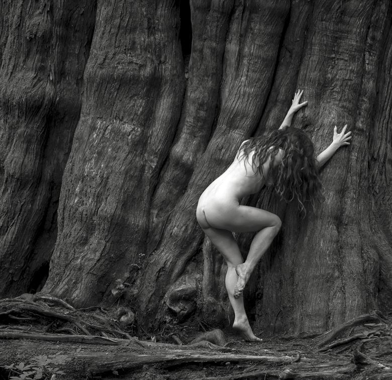 big tree figure study photo by photographer eric lowenberg