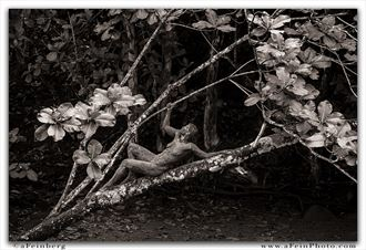 branch out artistic nude photo by photographer afeinberg