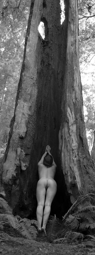 burnt redwood artistic nude photo by photographer eric lowenberg