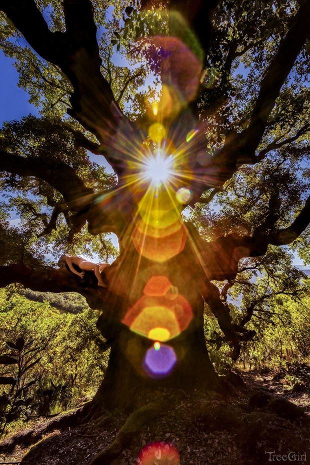 cork oak chakragasm nature photo by photographer treegirl