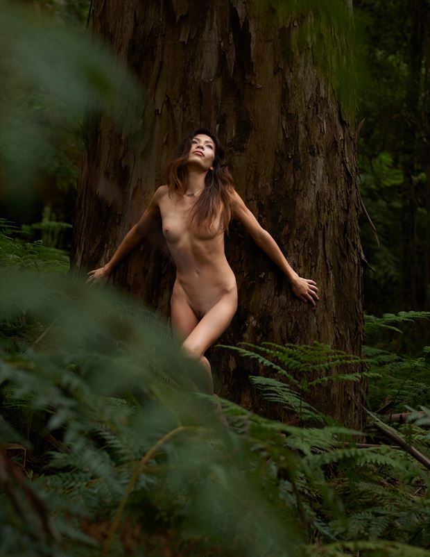 dryades the forest nymph artistic nude photo by photographer tfa photography