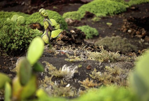 el cactus humano Nature Photo by Photographer Laila Pregizer
