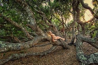 elfin forest oakgirl artistic nude photo by photographer treegirl
