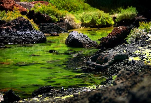 fairy place Nature Photo by Photographer Laila Pregizer