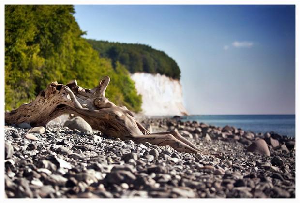 flotsam Nature Photo by Photographer Laila Pregizer