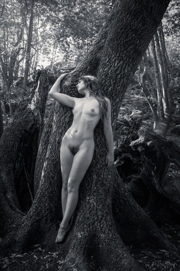 forest figures b w artistic nude photo by photographer steve berkley