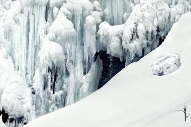 ice age creature Nature Photo by Photographer Laila Pregizer