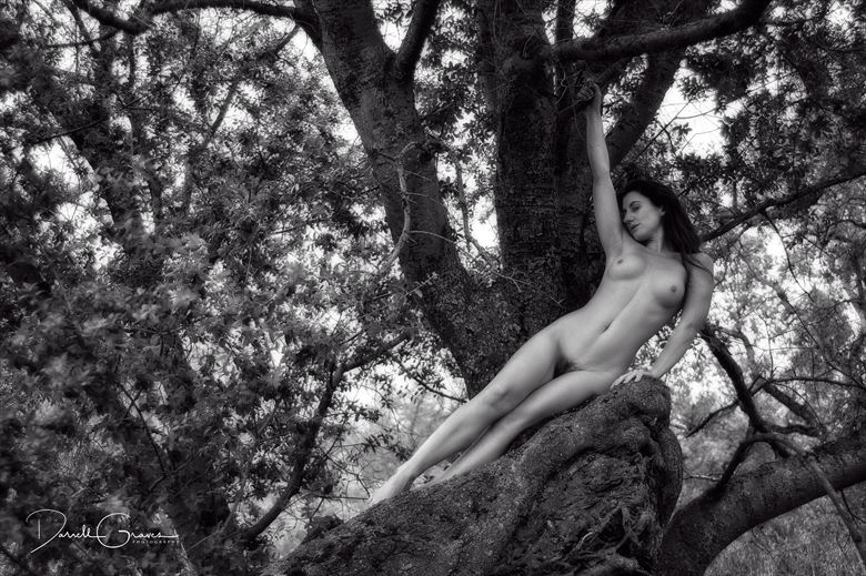 katy t 2272 artistic nude photo by photographer darrell graves