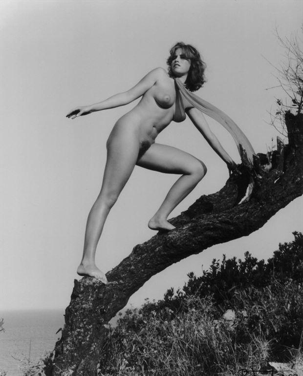 l arbre de la mer 4 artistic nude photo by photographer dick