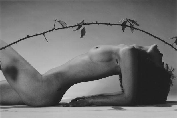 la branche piquante 3 artistic nude photo by photographer dick