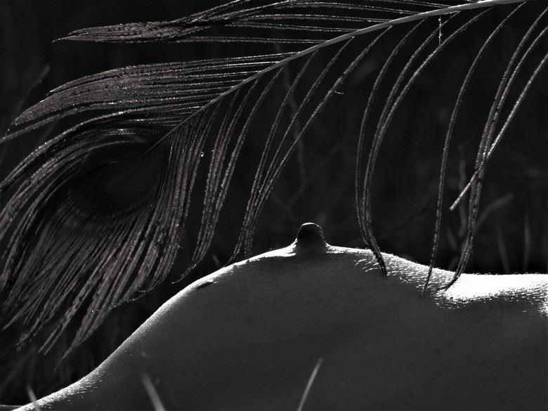la caresse du paon 2 artistic nude photo by photographer dick