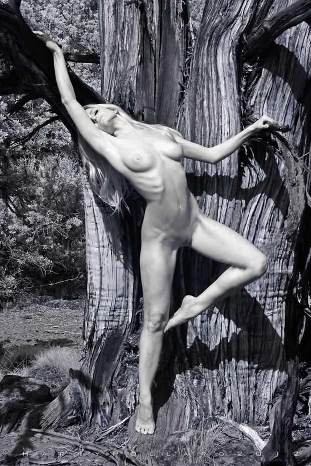 liz at old juniper artistic nude photo by photographer shootist