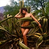maguey mexico artistic nude photo by model meghan claire