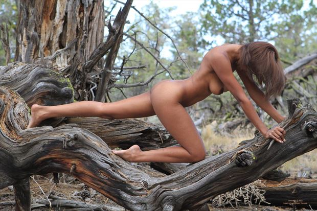 merrique on log artistic nude photo by photographer shootist