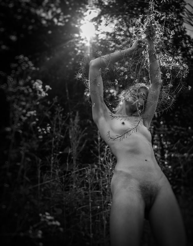 morning forrest alaina artistic nude photo by photographer dave earl