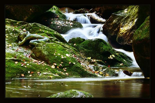 mountain stream frog Nature Photo by Photographer Laila Pregizer