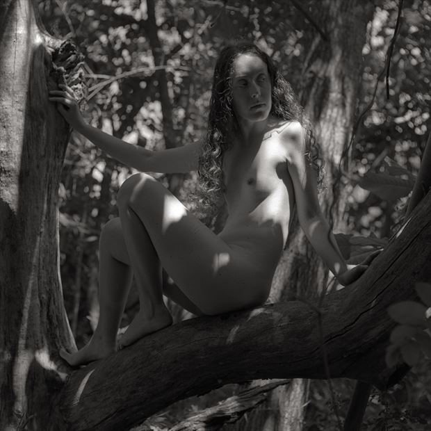 nature chiaroscuro photo by photographer peaquad imagery