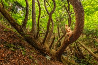never give up look up sugi artistic nude photo by photographer treegirl