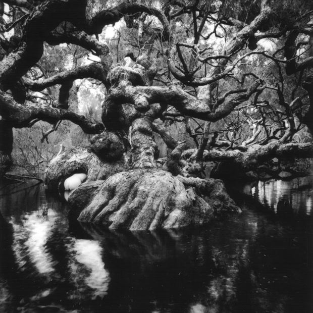 nude melaleuca swamp western australia 1997 nature photo by photographer jbaphoto