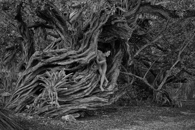 oldest tree in key west artistic nude photo by photographer bradmiller